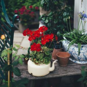 théière vintage vase