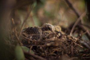 petit oiseau oisillon cri faim nid maman bébé animal mignon