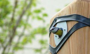 oizzo nichoir cabane oiseaux moineaux durable