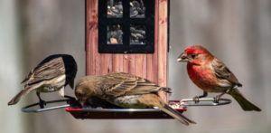 oiseau mangeoir nourriture passereaux